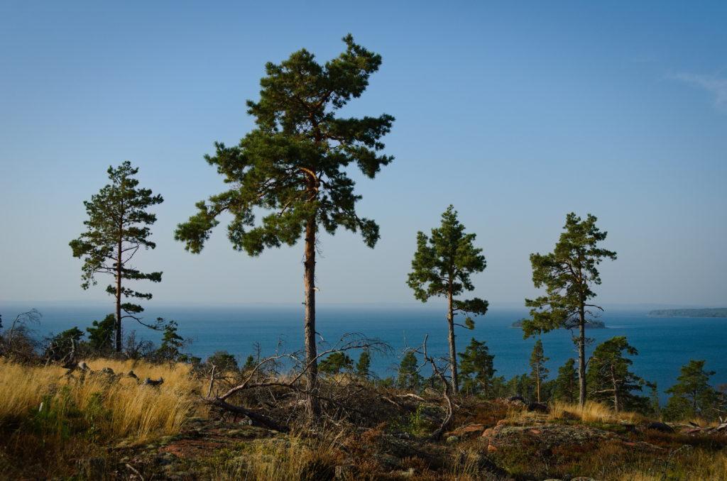 De fyra vakterna utefter Mickelsö vandringsled på Vårdö, Åland.