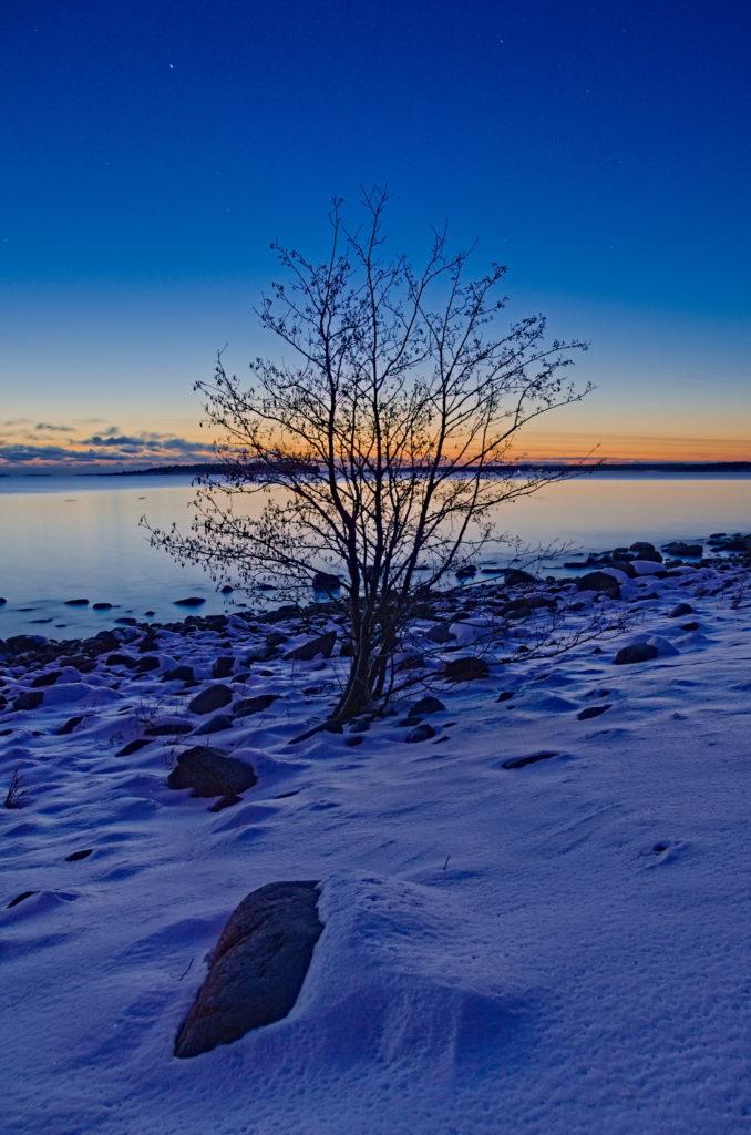 En al på stranden till Gregersö med solnedgång i vinternatten. bakom sig.