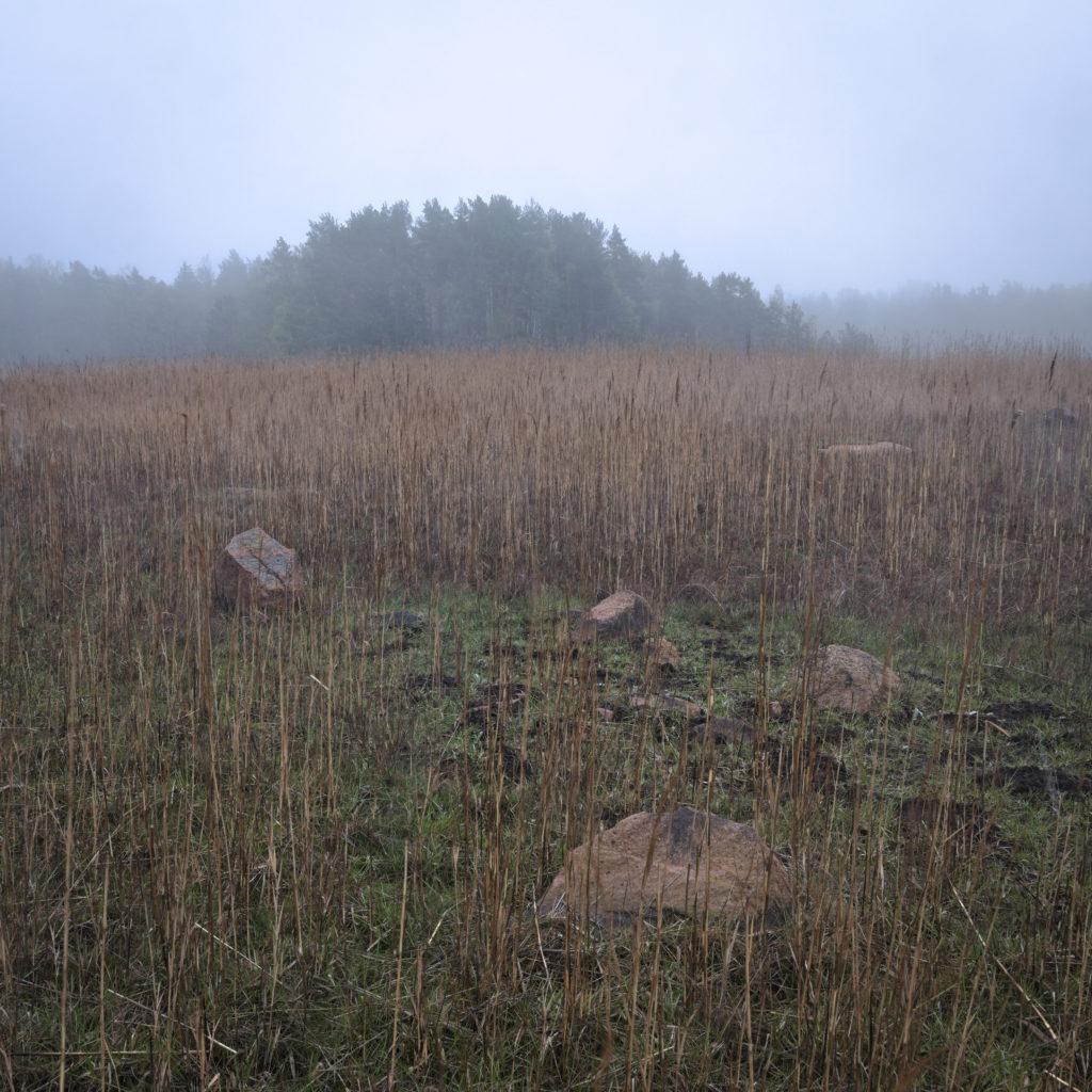 Morgon dimma över vassfält i Lemland, Åland.
