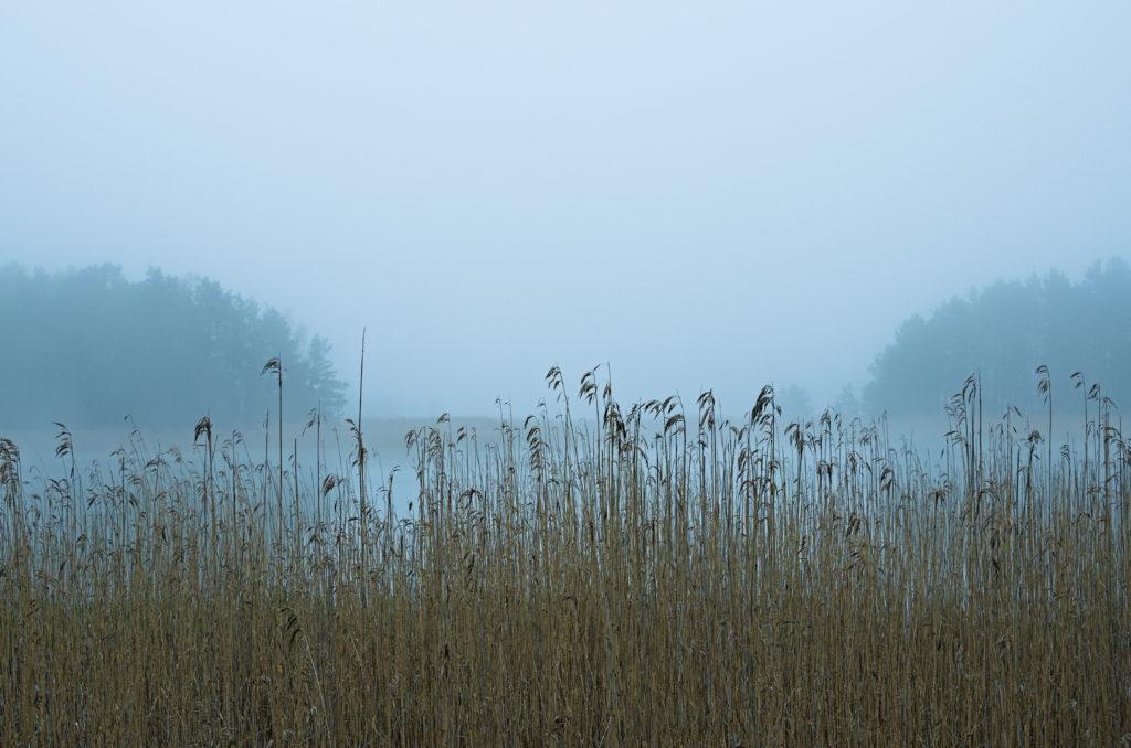 Vass vid en dimmig vik i Lemland, Åland. Photographic Steps.